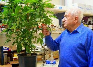 mechoulam-with-the-plant-61